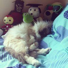 Kiara Cat | Pawshake Sydney