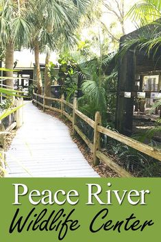 A Southwest Florida gem - the Peace River Wildlife Center in Punta Gorda (between Fort Myers and Sarasota). Check out our pictures and more information!
