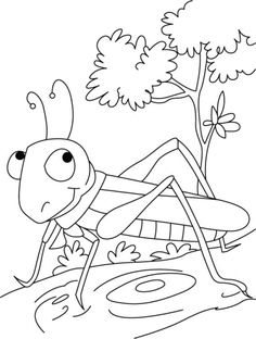 The show-stopper-Grasshopper coloring pages   Download Free The show-stopper-Grasshopper coloring pages for kids   Best Coloring Pages