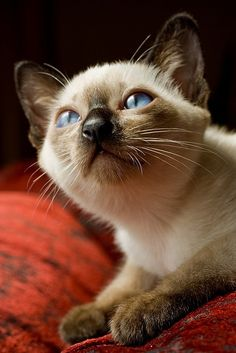 her name is Cinnamon (Tarçın) by Basak Gurbuz Derman on Flickr.