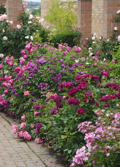 roses de toute beauté !