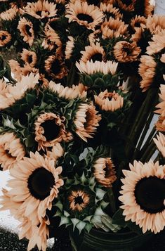 New Ideas For Plants Wallpaper Iphone Beautiful Flowers Aesthetic Iphone Wallpaper, Aesthetic Wallpapers, Artsy Wallpaper Iphone, Wallpaper Iphone Vintage, Trendy Wallpaper, Cute Wallpapers, Wallpaper Backgrounds, Floral Wallpapers, Wallpaper Plants