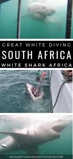 Go shark cage diving with great white sharks in Mossel Bay, South Africa with travel writer Justin Walter and White Shark Africa for a Shark Week adventure. Travel Around The World, Around The Worlds, Book My Trip, Shark Cage, Shark Facts, Seal Beach, Great White Shark, Shark Week, Live In The Now