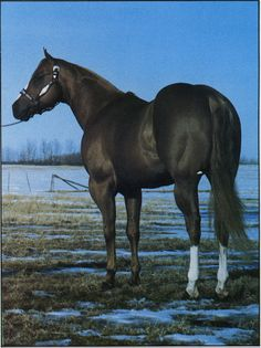 Mr Dial Socks - 1975 Sor S - Sire of Superior Halter, Super Horse Champ, QHAA High Point Champions