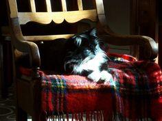 Morgan in the sun