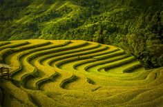 Smithsonian Magazine Announces Annual Photo Contest Finalists travel nature Vo Anh Kiet (Ho Chi Minh City, Vietnam). Terraced fields during harvest season. Smithsonian Photo Contest, Nature Landscape, Concours Photo, Colossal Art, Photo Competition, Photography Contests, Photography Ideas, Nature Photography, Belleza Natural