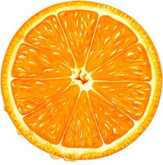 Florida oranges, Florida citrus and Florida gift fruit baskets shipped fresh from Florida citrus groves. We ship gift fruit for the holidays including oranges, grapefruit, tangerines and honeybells. Lemon Painting, Orange Painting, Watercolor Illustration, Watercolor Art, Lemon Art, Fruits Drawing, Florida Oranges, Orange Fruit, Fruit Art