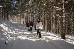 A group of people hiking in a snow covered forest.