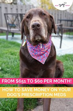 I learned how to save up to 90% off my dog's epilepsy medication. As a special needs rescue, he was in the shelter for over a year because his medication is so expensive! You can save money on your own dog's medications. I'll explain the following: Save Money By Taking your Dog's Prescription to a Regular Pharmacy, Ask Your Vet or Pharmacist if There's a Better Price, Use Good RX to Find Coupons for Pet Medications, For Longterm Pet Medications, Fill in Bulk. Epilepsy Medication, Medication For Dogs, Epilepsy In Dogs, Black Lab Mix, Dog Cleaning, Dog Training Tips, Dog Care, Dog Gifts, Dog Grooming