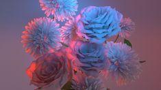 Flowers on Behance Spring Aesthetic, Flower Aesthetic, Orchid Wallpaper, Wallpaper Backgrounds, Wallpapers, Neon Lighting, Still Life, Flower Power, Orchids