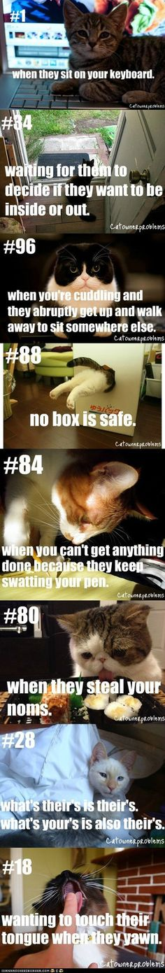 Cat owner problems. How many of these happen to you? ;) Mostly the last one, it's just too hard to resist.