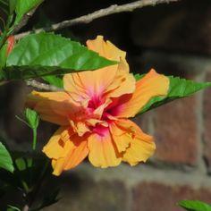 In @Hilary Knight dads garden