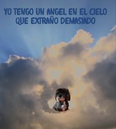 Yo tengo un ángel en el cielo, perrita entre nubes I have an angel in the sky, dog among clouds en el cielo Animals Beautiful, Animals And Pets, Dog Cat, Sad, Clouds, Puppies, Feelings, Dogs, Diy Dog