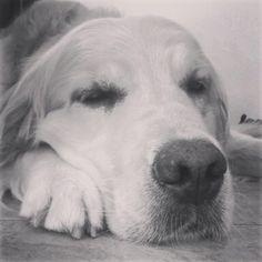 vita da cani......
