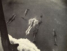 natgeofound:    Dolphins seen from above jump in the wake of a passing ship, 1918.Photograph by W. C. Moore, National Geographic