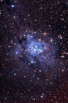 Dusty reflection nebula NGC 7129 and open star cluster NGC 7142 in the constellation Cepheus