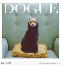 Exclusive magazine for dogs.