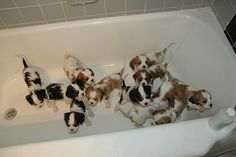 Bathtub of puppies!