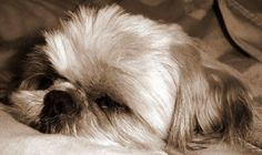 My cute little puppy, Yvette (1)