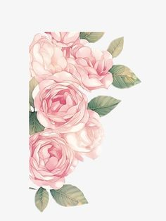 Pintado a mano de peonía, Peony, Peony, Pink Peony Imagen PNG