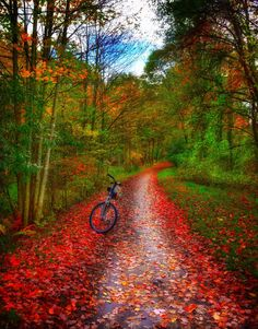 """Fall colors were so beautiful on the Virginia Creeper Trail (in North Carolina on Oct. I had to keep stopping my ride to look and take pictures."" Marty Joyner, Your Take Virginia Fall, Virginia Beach, Cities, Edge Of The Universe, Virginia Creeper, Vacation Trips, Vacation Travel, Painted Leaves, Sunset Sky"