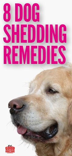 8 Real Dog Shedding Remedies That Will Make Your Life Less Hairy Dog hair comes with being a dog lov Stop Dog Shedding, Dog Shedding Remedies, Dog Care Tips, Pet Care, Dog Grooming Tips, Real Dog, Dog Safety, Can Dogs Eat, Dog Hacks
