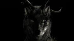 Lobo rostro