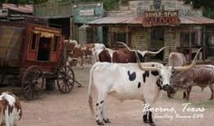 Enchanted Springs Ranch Boerne, Tx Keeping the Old West alive San Antonio Attractions, Local Attractions, San Antonio Things To Do, San Antonio Vacation, Visit San Antonio, Old Western Towns, Old West Photos, Texas Vacations, Texas Ranch