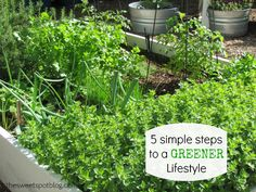 5 Simple Ideas for a Greener Lifestyle
