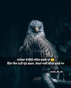 Punjabi Poetry, Chandigarh, Owl, Bird, Pictures, Animals, Instagram, Photos, Animaux