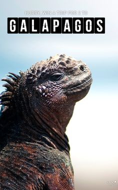 The Galapagos Islands. US Residents can WIN a trip for TWO! Enter now ---> http://www.lan.com/onlyinsouthamerica/countdown/?utm_source=blogger&utm_medium=mappingmegan&utm_campaign=Countdown+to+South+America