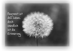 www.hunde-aktuell.de attachments hund-tot-png.107842