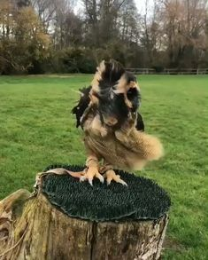 What a beautiful owl I am so facinated with them Funny Animal Videos, Cute Funny Animals, Cute Baby Animals, Funny Owls, Baby Owls, Videos Funny, Beautiful Owl, Animals Beautiful, Nature Animals