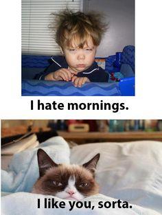 Grumpy morning, grumpy cat morning, grumpy cat mornings ...For more hilarious memes and funny stuff visit www.bestfunnyjokes4u.com/lol-funny-cat-pic/