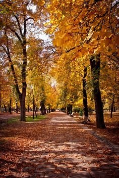 Autumn in Cluj-Napoca Central Park, Romania. I have been in this park too many times. Autumn Trees, Fall Leaves, Autumn Fall, Beautiful Places, Beautiful Pictures, Visit Romania, Beyond The Sea, Travel And Leisure, Eastern Europe