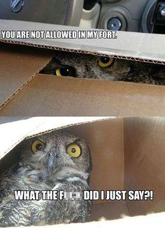 funny-animal-captions-002-003.jpg (600×830)