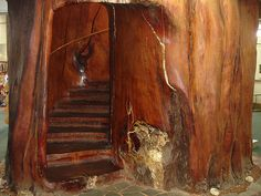 Spiral Stairs carved out of a Kauri Tree at the Ancient Kauri Museum, New Zealand Loretto Chapel, Kauri Tree, Cool Tree Houses, Giant Tree, Scenery Pictures, Hobbit Hole, Stairway To Heaven, Ideal Home, Stairways