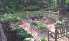 Veggie Garden 2011