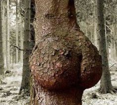 There's some junk in the trunk.