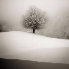 Photographic Print: Winter Degradee by SC : 24x24in