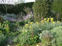 Honesty in The Gravel Garden -by Anna via Flickr
