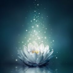 Lotus flower in starry light. Lotus Flower Pictures, Lotus Flower Art, Lotus Wallpaper, Wallpaper Backgrounds, Wallpapers, Lotus Azul, Mystical Pictures, Buddha Painting, Lotus Painting