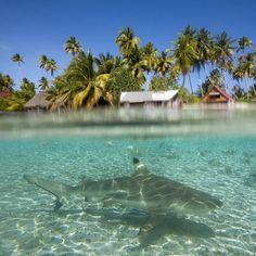Photo by @argonautphoto: A #shark roams the waters of the Fakarava Atoll. #FrenchPolynesia #tropical #ocean by natgeocreative