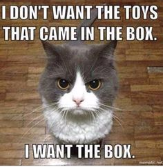 25 Memes About Cats and Dogs That Every Pet Owner Will Love Funny Animal Memes, Cute Funny Animals, Cute Cats, Funny Cats, Funny Memes, Dog Memes, Funniest Animals, Funny Captions, Cat Fun