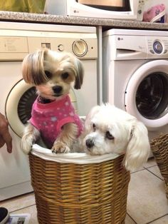 Double doggy cuteness overload! Enter your pet to win a share of R101 000! #SouthAfrica only. #Pet competition. mymostbeautiful.com/