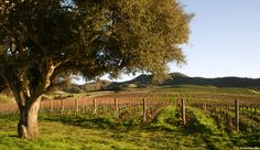 A leisurely tour of the wine country just outside #Lompoc, which includes approximately 30 wineries in the Sta. Rita Hills and Santa Ynez Valley, will take you over peaceful country roads through picturesque farmland dotted with thousands of acres of vineyards. Photo by Jason Reynolds