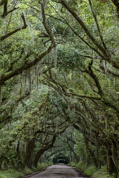 Edisto Island, South Carolina. the south