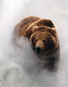I have to confess right now that I may pin more bear pictures than anything else because the bear is MY spirit animal.