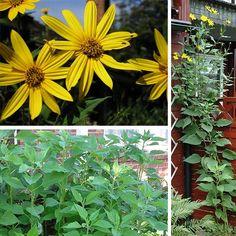 Vysněná zahrada: Plány na další pěstování zeleniny v naší zahradě