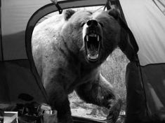 Michio Hoshino, a photographer known for his pictures of bears and other wildlife, was mauled to death by a brown bear on the Kamchatka Peninsula in eastern Russia. He was in his mid-40′s and lived in Fairbanks, Alaska.      This was the last photo he took.